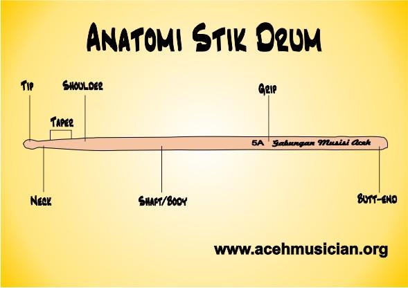 Drum Stick Anatomy
